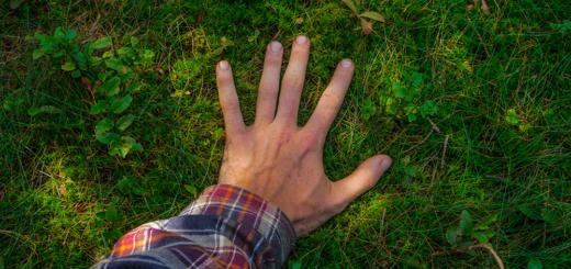Die Erde ist viel grüner als vor 20 Jahren – @envato | PaulSchlemmer