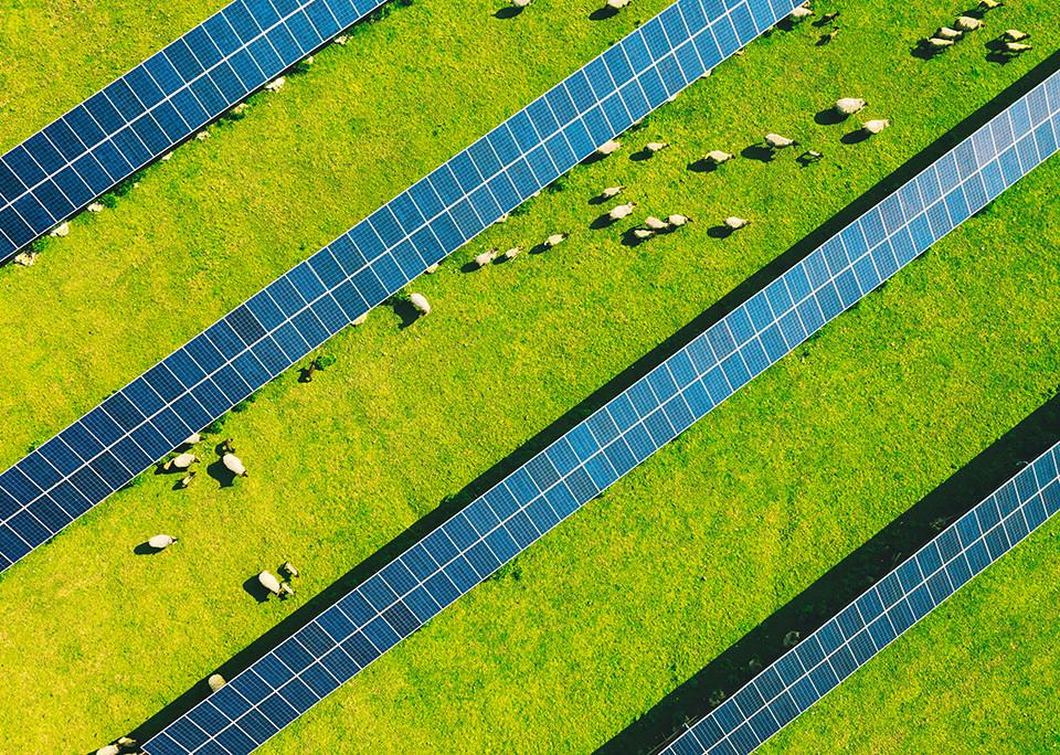Solarpark mit Weideschafen – @shutterstock   David Jancik