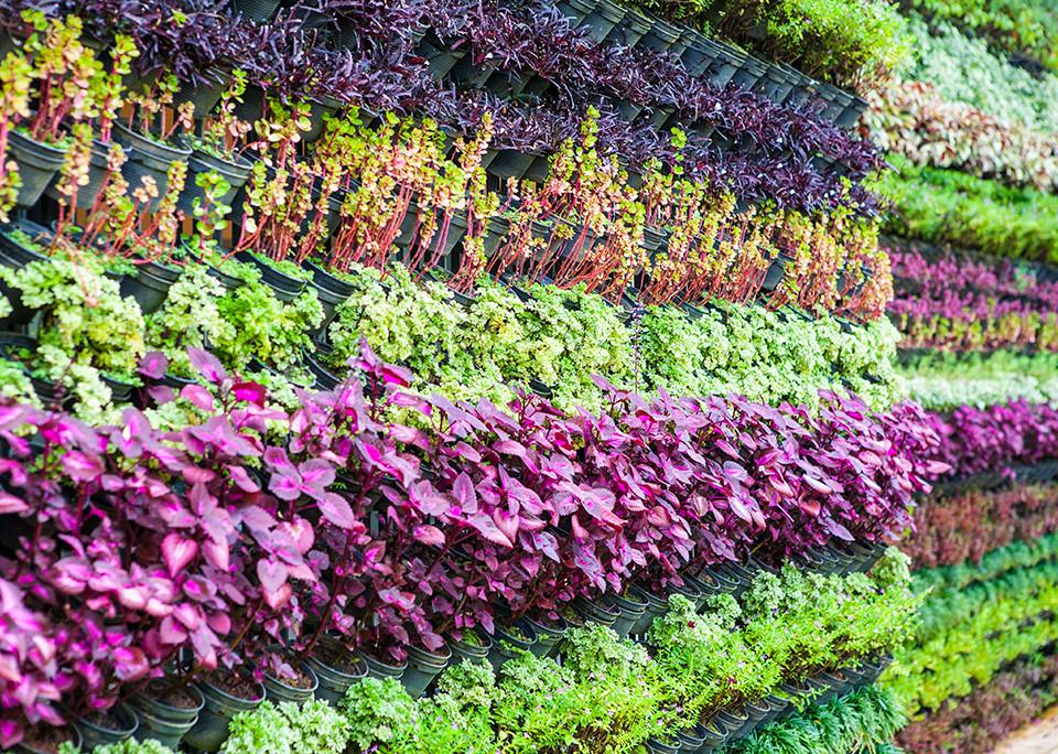 Vertical Gardening - @shutterstock   Iammotos